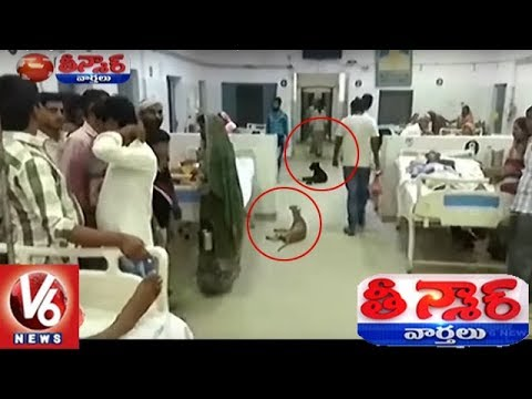 UP: Stray Dogs Spotted Inside Hardoi District Hospital Wards | Teenmaar News | V6 News