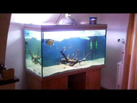 Turtle tank custom basking area plexi glass acrylic night time
