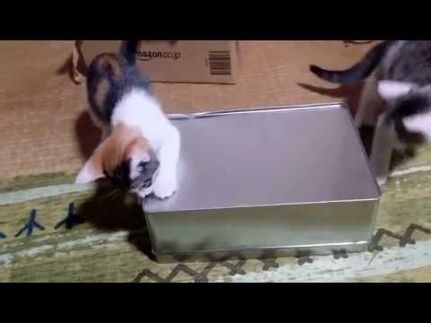 箱入れ子猫