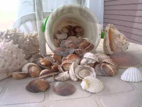 Conchas marinas youtube - Manualidades con conchas ...