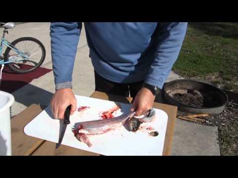 рыбалка клин форель
