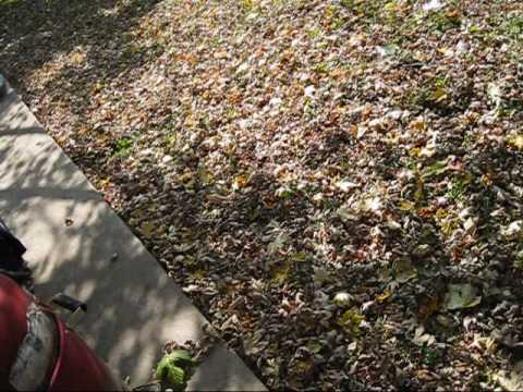 Vacuuming Leaves with the Toro Super Blower/Vac