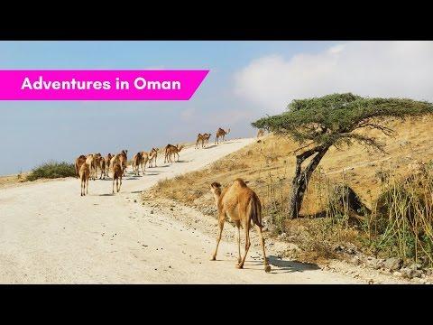 OMAN: Rub Al Khali, Salalah & lots of camels!