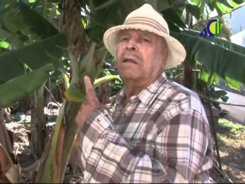 Rufino, maestro de deshijadores en Los Silos - Tenerife