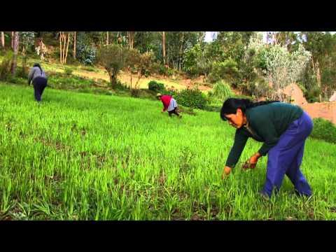Las Semillas y la Seguridad Alimentaria familiar - Emergencia climática