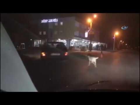 Köpeği Arabaya Bağlayıp Arkasından Metrelerce Sürükledi!