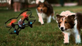 My Dogs Love Chasing Drones, Adorable! - GizmoSlip