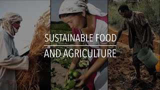 FAO Policy Series: Sustainable Food and Agriculture