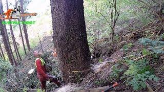 Fail wenn beim Holzfällen es nicht so läuft wie es soll…  auch ich mache Fehler       Uncut