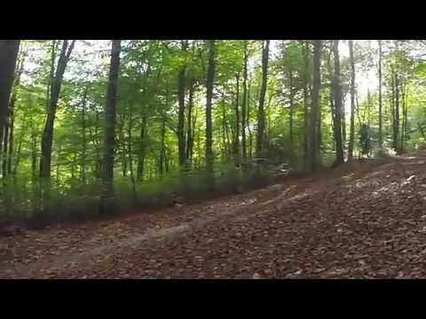 Queen Elizabeth Country Park Downhill Mountain Bike