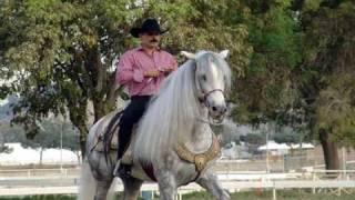 Vídeo 61 de El Chapo De Sinaloa