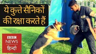 Indian Army के Dog Squad की Training कैसे होती है?  (BBC Hindi)