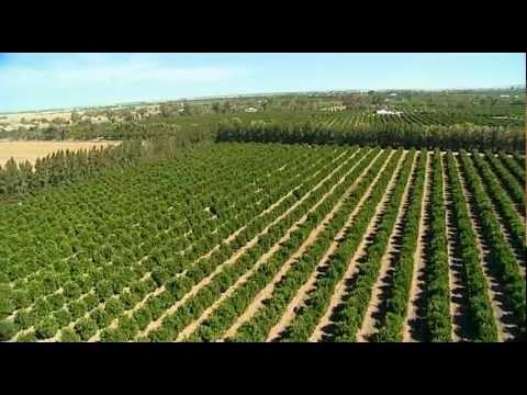 Riverina Agriculture Australia  by Vince Bucello