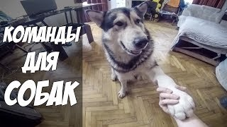 Команды на английском | Дрессировка собак хаски и маламута | Dog training for husky and malamute