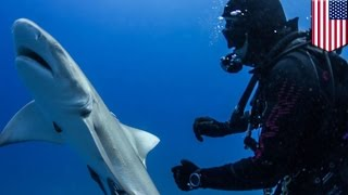 Shark begs for help: incredible footage shows shark with hook in its body nudge divers - TomoNews