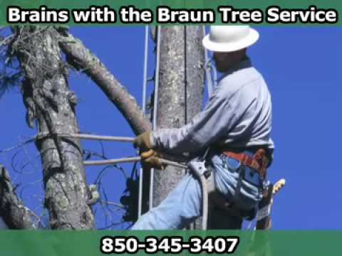 Brains with the Braun Tree Service, Tallahassee, FL
