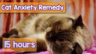 Nature Sounds to Relax Anxious Cats! Rain Sounds, Beach Sounds, Lake Sounds to Calm Stressed Cats!