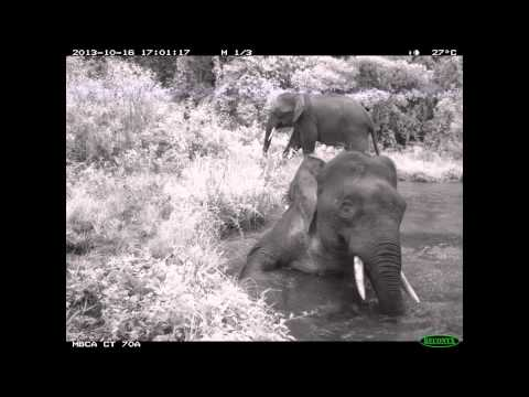 Camera Traps for Conservation
