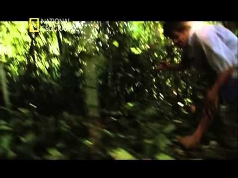 LOS ANIMALES MAS PELIGROSOS DEL MUNDO: 7: EL AMAZONAS