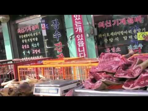 Dog Massacre in South Korea