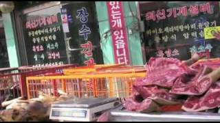Dog Massacre In South Korea