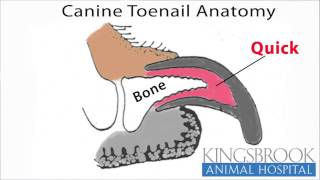 How To Trim Your Dogs Nails-Kingsbrook Animal Hospital