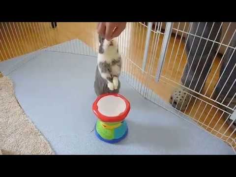 Bunny playing the drum!