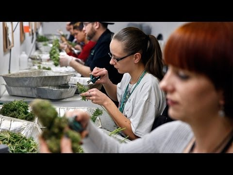 Medbox CEO Weighs in on Marijuana Stocks