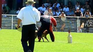 COLT AU PARADIS D'ORSY finale Ring 2011 à Tavaux,  face