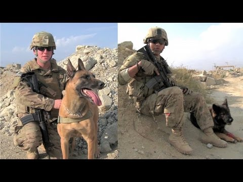 Two Airmen And Their Bomb Dogs In Afghanistan