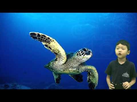 Sea Turtles KGB