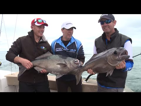 Blue Eye Cod and Kingfish off Sydney