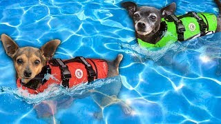 Giving our Dogs Swimming Lessons for the First Time! | Pawzam Dogs