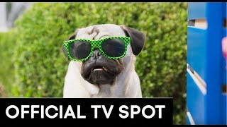 "SHOW DOGS | OFFICIAL 20"" TV SPOT"