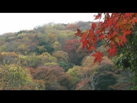養老町 養老の滝 ~紅葉~