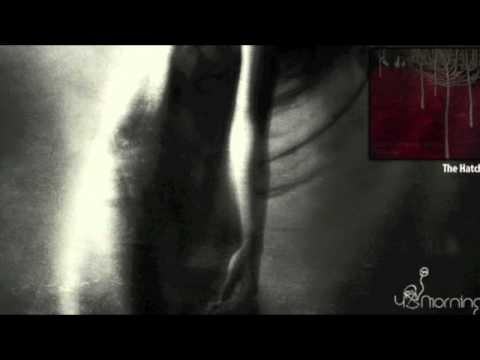 Dawn Chorus Ignites - The Hatch