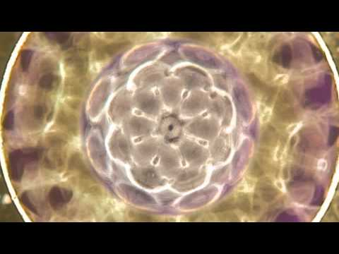 Nerve Cell Regeneration Cymatics