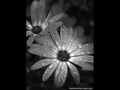 Neonate - Это просто дождь