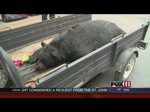 Big bear bagged in Oconto County
