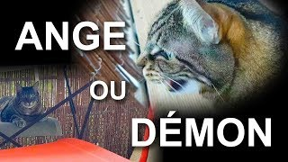ANGE OU DEMON - PAROLE DE CHAT