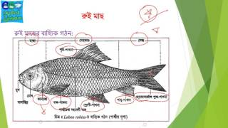 Medical admission preparation- Labeo rohita, (HSC biology 2nd paper 2nd chapter)