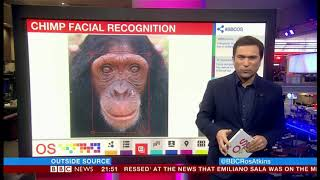 Chimp facial recognition to combat illegal trade (Global) - BBC News - January 2019