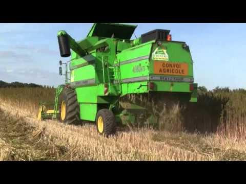 Уборка конопли на зерно зерноуборочным комбайном