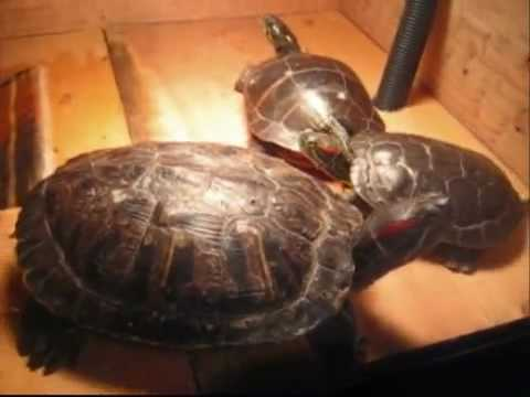 How To Make An Above Tank Basking Area For Turtles
