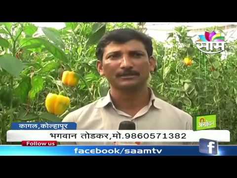 Bhagwan Todkar's polyhouse capscium farming success story