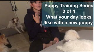 Puppy Training Series Part 2 of 4:  Potty training, obedience and more