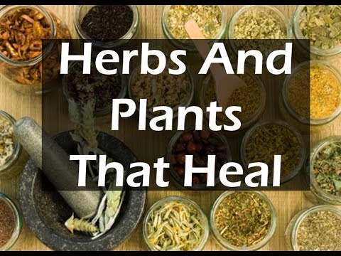 10 Superherbs To Spice up Your Life