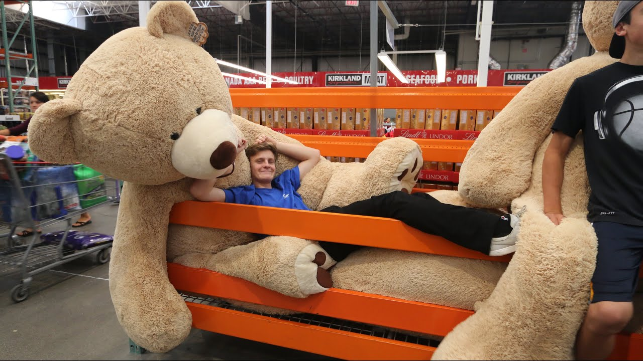 Costco bear is loved by shoppers  Business Insider