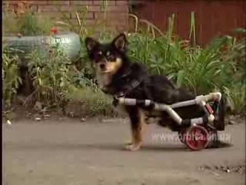 Необычная собака в Красноармейске