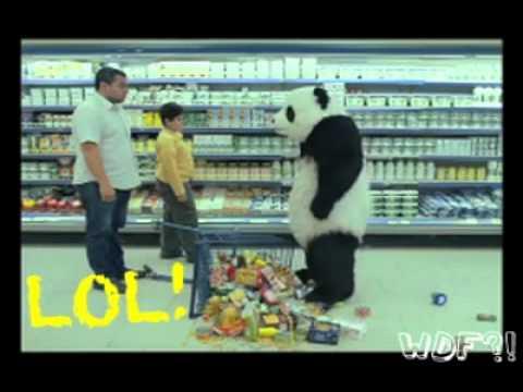 WDF Episodio 43 - Oso Panda Asesino!!